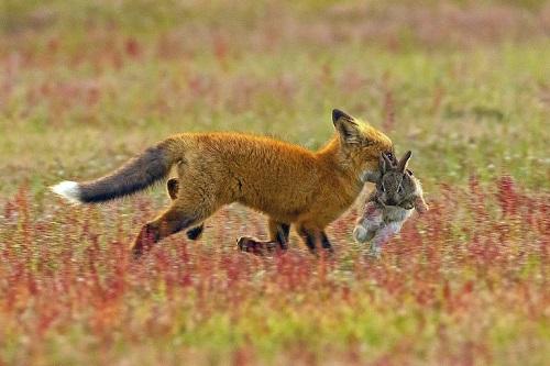 Foto http://www.storytrender.com/