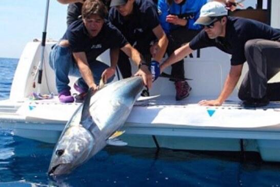 La ciencia, la investigación y la pesca deportiva se aúnan en la Bermeo Tuna Tagging Race