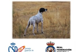 XXVII Campeonato de España de Caza Práctica Perro de Muestra (CACT-CACIT)
