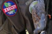 El MAPA apuesta por la gestión de la tórtola y no por su prohibición