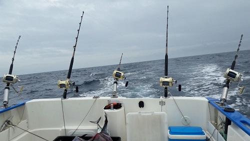 Resumen temporada de pesca deportiva de túnidos. La administración vuelve a castigar al sector recreativo
