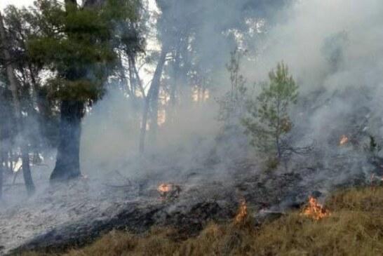 Animalista prende fuego a un monte cerca de unas palomeras en Navarra (+Vídeo)
