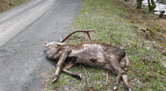 Ciervos afectados por sarna en La Rioja