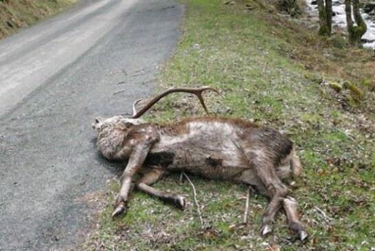 Alertan de un virus que portan los ciervos y puede afectar al ser humano
