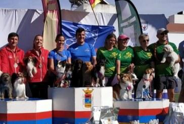 El V Campeonato de España de Agility y la IV Copa Júnior