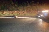 Jabalí provoca accidente de tráfico en Urkiola