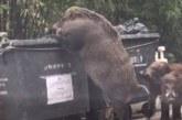 La Mixomatosis y la Peste Porcina marcarán la temporada de caza, según Fundación Artemisan