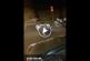Los jabalíes en las calles, cada día más y más (+ vídeo)