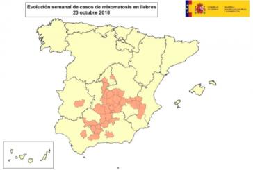 La mixomatosis alcanza ya a liebres de al menos 12 provincias