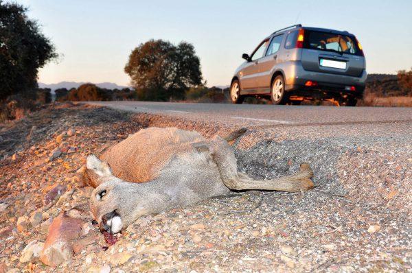 El TC refrenda la reforma de la Ley de Tráfico en materia de accidentes de caza