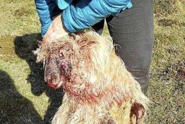 Forestales recuerdan que no pueden sacrificar perros