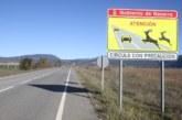 Adecana relaciona el aumento de accidentes de jabalíes (vídeo)