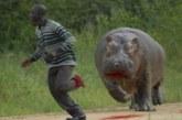 Animales peligrosos (+ vídeo)