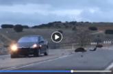 Espectacular accidente de trafico provocado por jabalíes