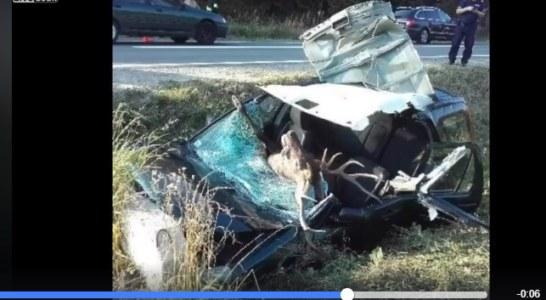 Grave accidente de trafico con un venado (+vídeo)
