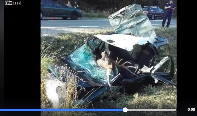 Grave accidente de trafico con un venado (+vídeo)