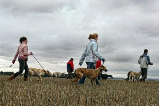 La RFEC denuncia a parlamentarios animalistas de APDDA