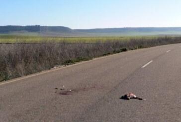 Tendencias de los accidentes de tráfico con fauna silvestre