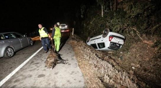Jabalíes y corzos provocan un accidente diario en La Rioja