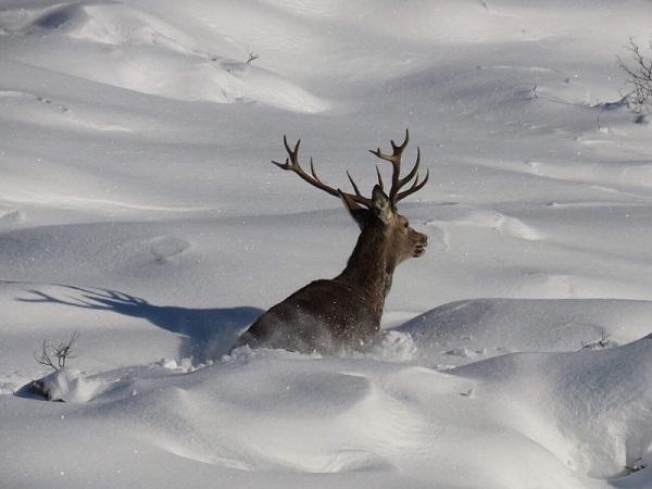 Predicar con el ejemplo. Cazadores ayudarán a la fauna silvestre durante la ola de frío