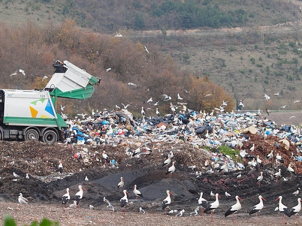 Cigüeñas blancas en Gardelegi (Vitoria-Gasteiz). 25.04.17