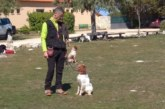 El II Curso de adiestrador de perros de caza prepara a futuros instructores