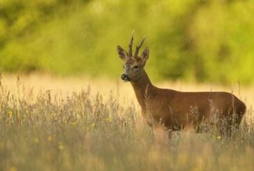 Todo lo que debes de saber sobre la apertura de la caza en Castilla y León este año