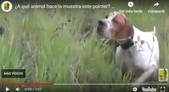 ¿A qué animal hace la muestra este pointer? No te pierdas el vídeo