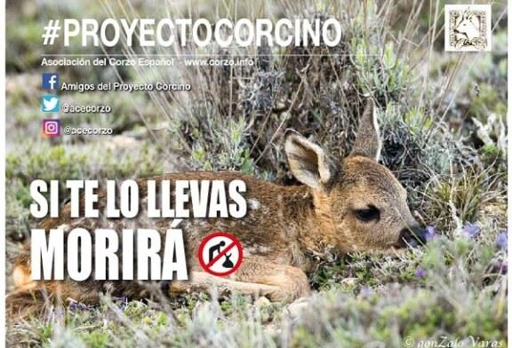 Campaña Proyecto Corcino 2019 de la Asociación del corzo Español ACE