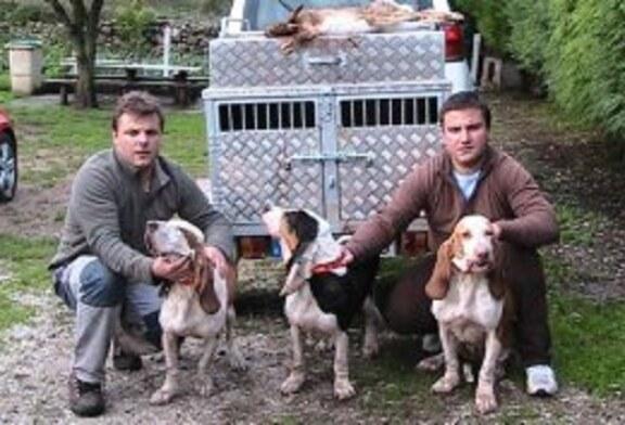 La caza de la liebre con perros de rastro