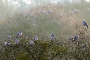Fundación Artemisan defiende ante la UE la modificación de los periodos hábiles de veda de aves migratorias en España