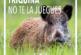 La RFEC recuerda la obligación de realizar el control veterinario de triquina en la carne de jabalí