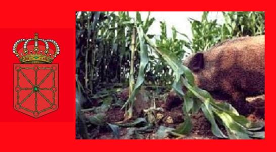 Adecana opina sobre los daños a la agricultura producidos por especies cinegéticas en Navarra