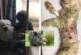 Jabalí mata a un perro que defendía a un niño de 4 años
