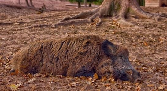 La RFEC y el MAPA continúan trabajando contra las enfermedades que afectan a la fauna