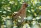 La primavera llena de vida la naturaleza (+ vídeo)