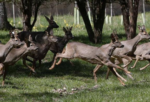 El Colegio de Biólogos declara que la caza no es sostenible y es un riesgo para la fauna