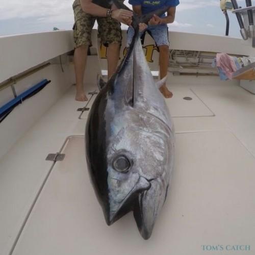 Noticias sobre la campaña de pesca deportiva de túnidos 2019