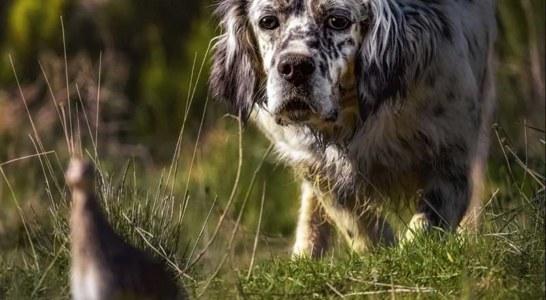 El perro requiere cuidados específicos para afrontar la media veda sin contratiempos
