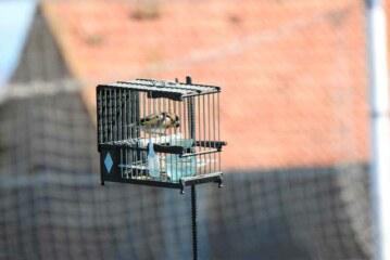 La RFEC y las FFAA siguen luchando por la defensa del silvestrismo
