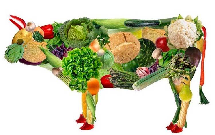 Resultado de imagen de vegetales que propone la onu