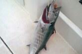 La pesca en la costa vasca alcanza este mes su momento de máximo esplendor