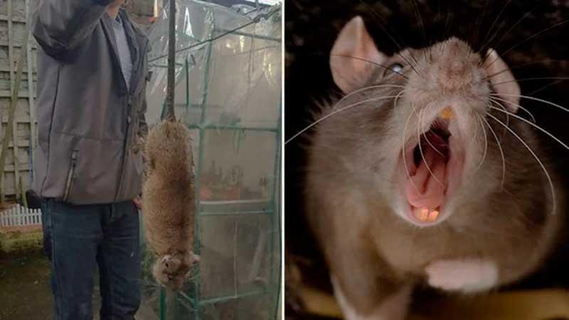El fin de las ratas