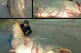 Así es el monstruoso siluro del Ebro