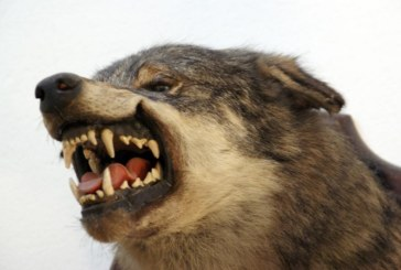 Más de cien científicos aseguran que la prohibición de la caza de trofeo afectará negativamente a la conservación