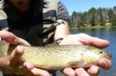 Consejos pesca de primavera en alta montaña