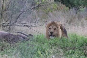 La revista Science publica un artículo que defiende la caza para conservar la biodiversidad