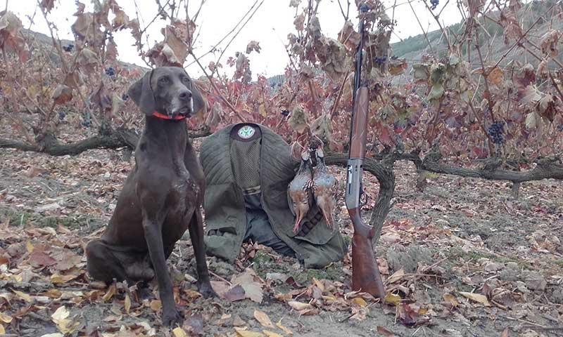 Hoy se desveda la caza menor en Castilla y León