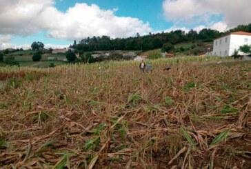 Agricultores proponen en Galicia la contratación de cazadores profesionales para cazar jabalíes