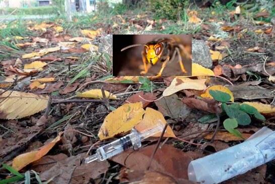 Muere acribillado por las avispas tras alcanzar un nido con la desbrozadora